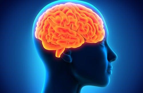 hjerneoghukommelsen