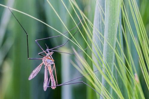 Unngå myggstikk