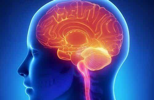 Tips og råd for å holde hjernen ung