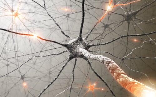nerveforbindelser