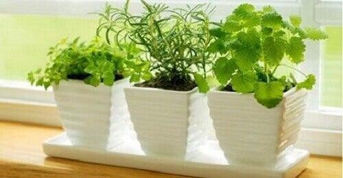 10 planter som tiltrekker seg positive energier
