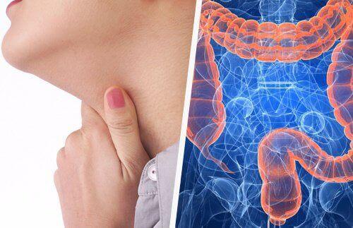 Forhold mellom halsproblemer og tarmen