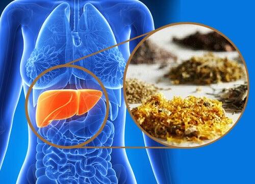 Medisinske urter for rensing av leveren