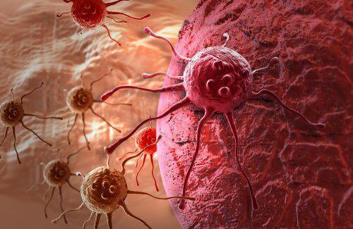 Lovende kreftbehandling med løvetann