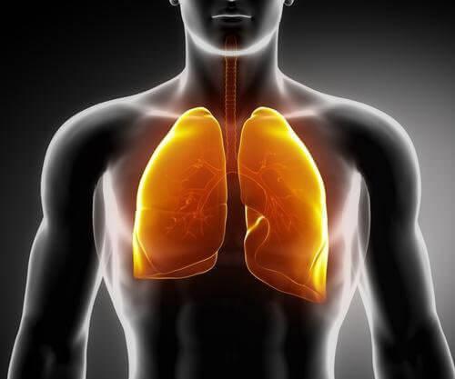 3 typer te som styrker lungene