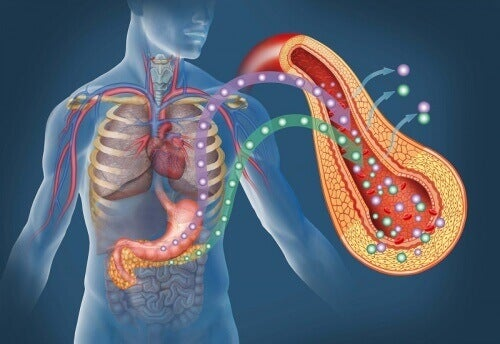bukspyttkjertelen-diabetes