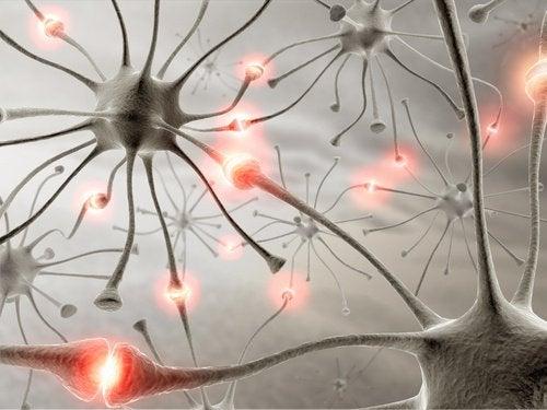 Hvordan hjelpe hjernen ved å gå
