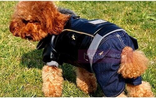 klær til kjæledyr