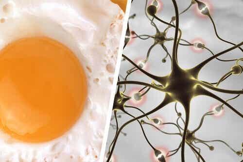 Mat og forslag som forbedrer hukommelsen din