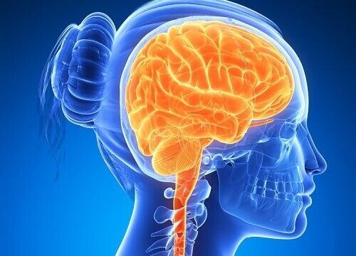 6 matvarer for aktiv og sunn hjerne