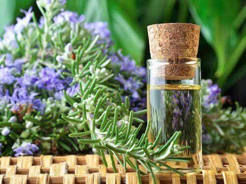 Remedier med rosmarin for bedre sirkulasjon