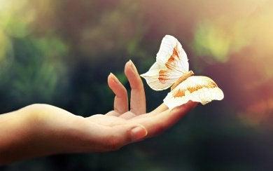 sommerfugl på finger