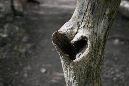2-hjerte-tre