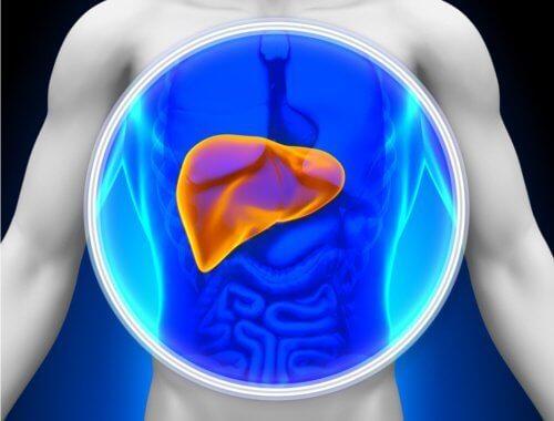 Prøv en detox med medisinske planter for leveren