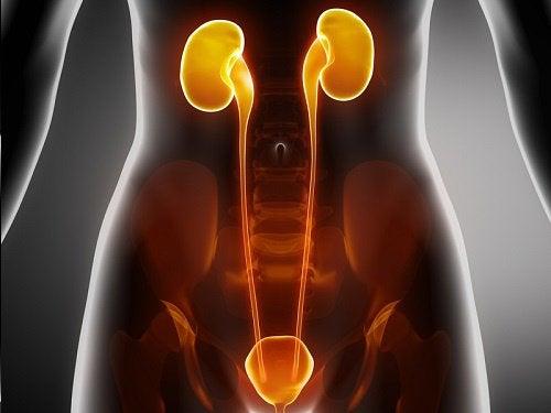 Behandling for infeksjoner i blæren, urinrøret og nyrene