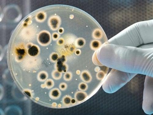 2-bakterier