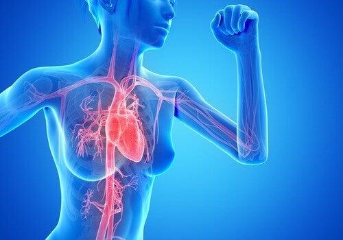 4-cardio