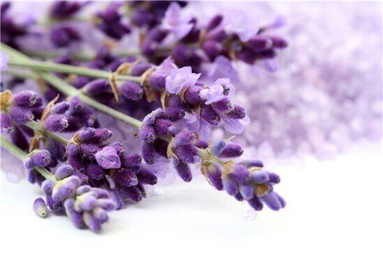 4-lavendel