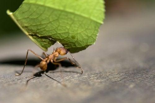 sitron-mot-maur-3
