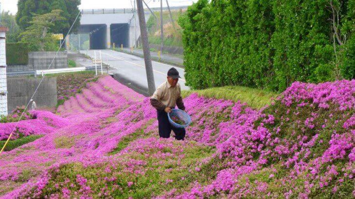 mann-i-blomsterhagen