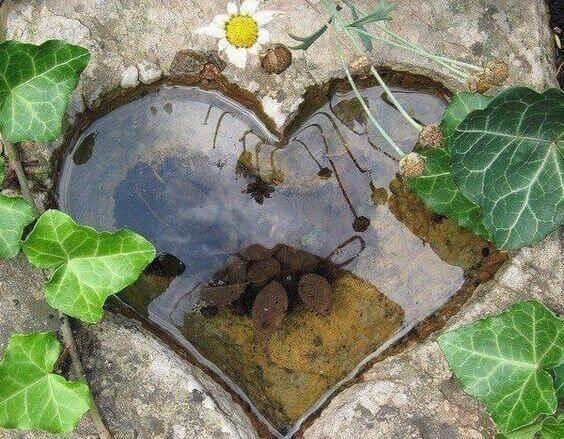 hjerte-vann