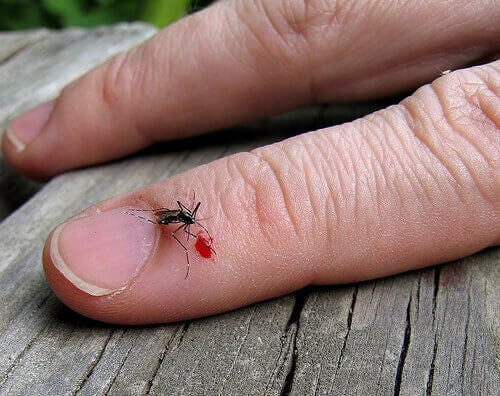 insektsbitt