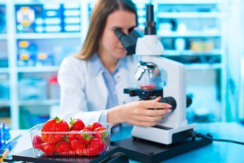 3-jordbaer-mikroskop
