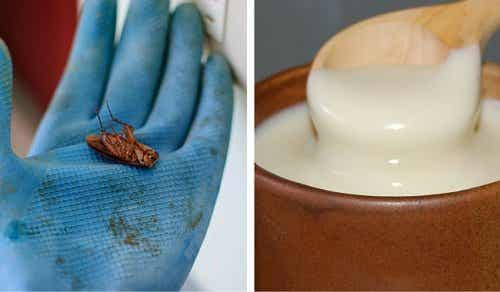 Bli kvitt kakerlakker for godt