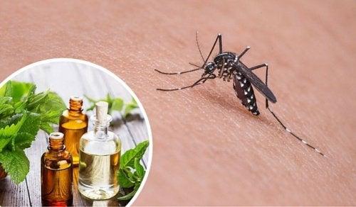 11 urter som frastøter seg mygg naturlig
