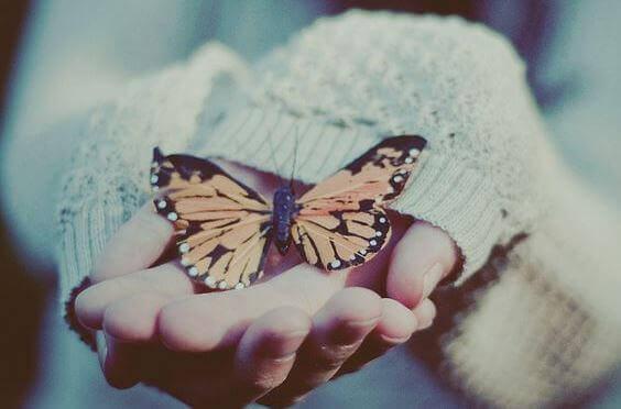 sommerfugl-i-hand