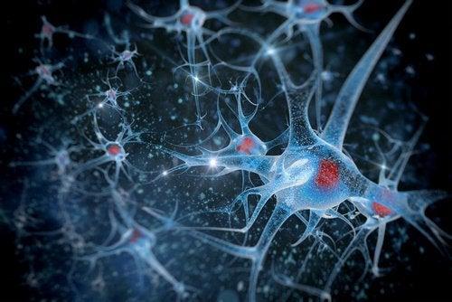 3-hjerne-helse