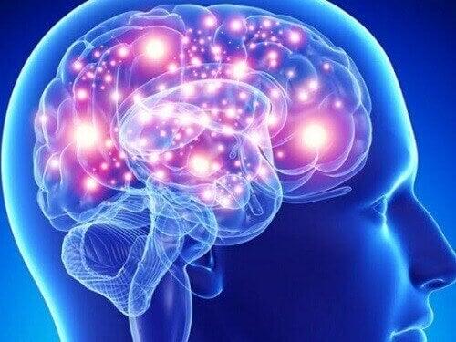 3-hjernen