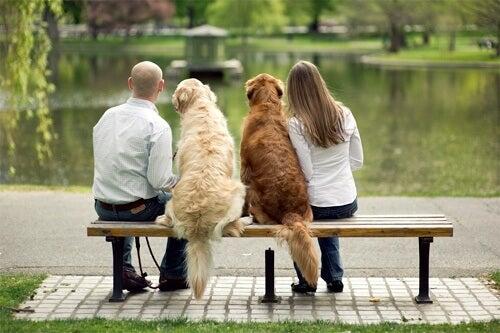 par-med-hunder