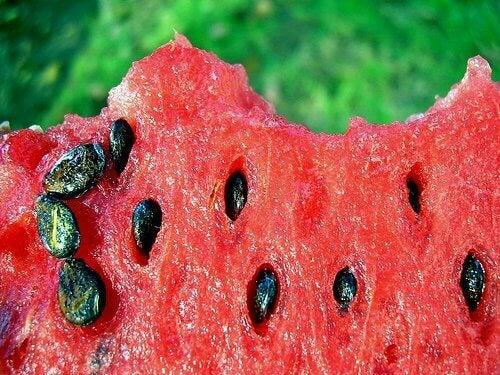 3-vannmelonfrø
