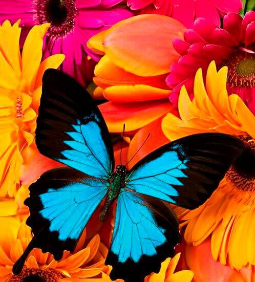 fargerik-sommerfugl