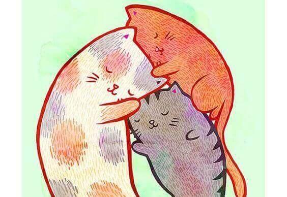 katt-familie