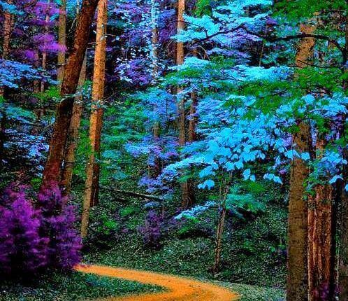 fargerik skog
