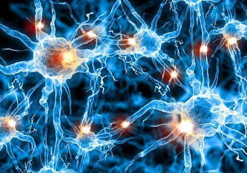 De beste fysiske øvelsene for en sunn hjerne
