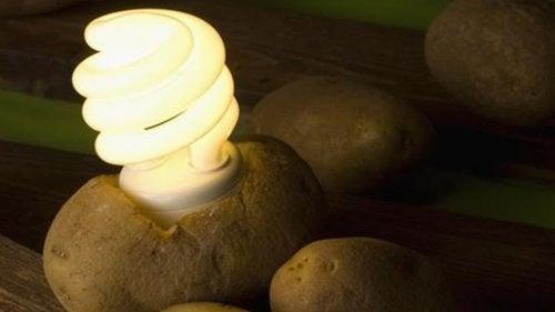 Finn ut hvordan du lager lys med en potet