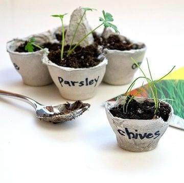 2-plante-fro