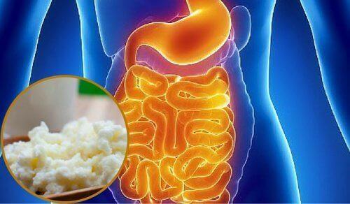 Slik kan du gjenopprette tarmfloraen på en naturlig måte