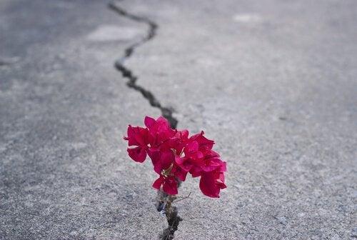 blomster-asfalt