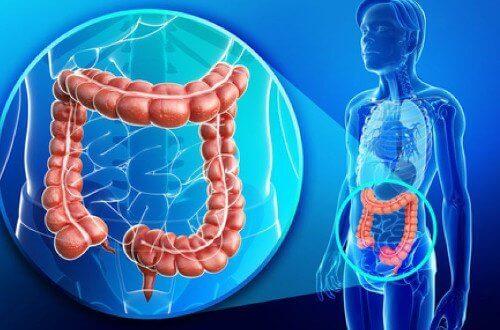Hvordan rengjøre colon naturlig?