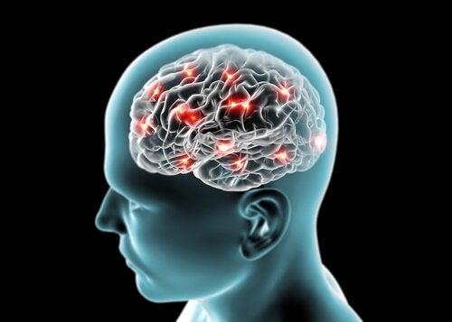 kanel stimulerer hjernefunksjonen