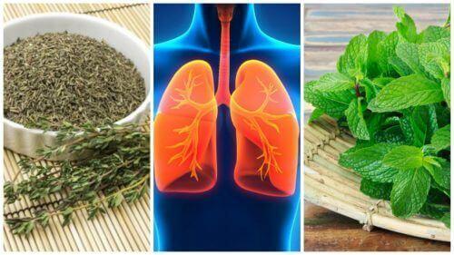 8 urter som kan gi deg bedre lunger