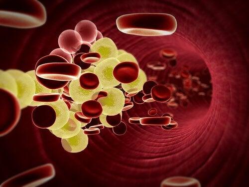 røde og hvite blodceller