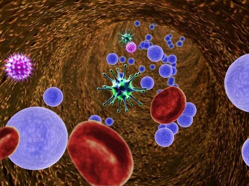 virus og bakterier