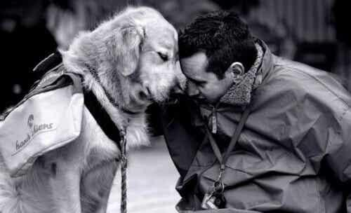 Slå deg sammen med en hund for å bekjempe hjemlengsel