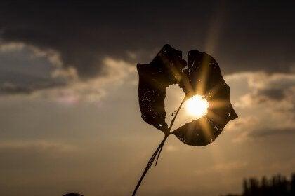 lys gjennom hjerte