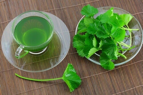 5 fantastiske fordeler med persille